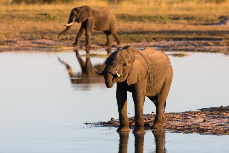 Elephants at a watering hole Hwange Zimbabwe